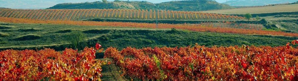 La Rioja tourism travel information and guide It Rains in Spain